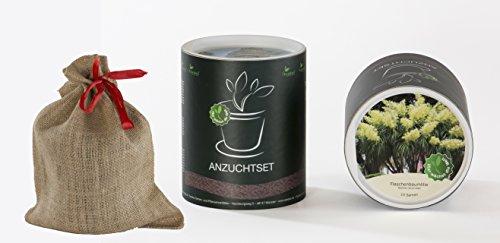 Seedeo Anzucht-Geschenkset Flaschenbaumlilie (Nolina recurvarta syn. Beaucarnea)