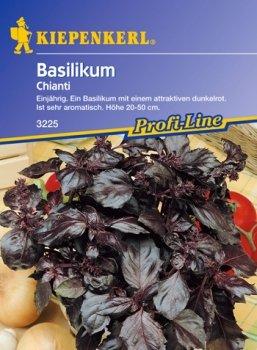 Rotblättriges Basilikum 'Chianti' (Ocimum basilicum)