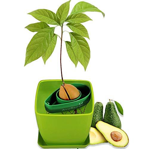 AvoSeedo das besondere Garten Geschenk - Pflanzen Sie Ihren eigenen Avocadobaum. Kleine Geschenke für Frauen und Männer Die neue klein Dekoration (Grün AvoSeedo + Grün Blumentopf)