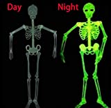 Halloween 5 Ft Skeleton Luminous Glow-in-The-Dark Skeleton for Halloween Party Bar Wall Sticker Decorations Outdoor Yard Garden Hanging Ornaments Props (5ft Skeleton)