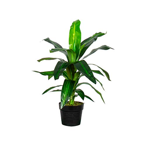 HTT Decorations – Drachenbaum (Dracaena Fragans) - Hochwertige Kunstpflanzen - 90cm hoch (60cm)