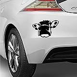 myrockshirt Pegatina divertida de cabeza de vaca de leche, 25 cm, resistente a los rayos UV y al túnel de lavado, calidad profesional