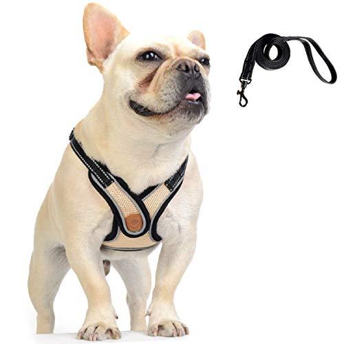 DD Pettorina Cane con Guinzaglio, Regolabile Riflettente imbracature e guinzagli per Cani Cucciolo Gatti Animali Domestici