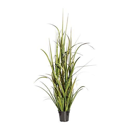 Pflanzen Kölle Kunstpflanze Miscanthusgras grün, ca. 135 cm, im Kunststofftopf