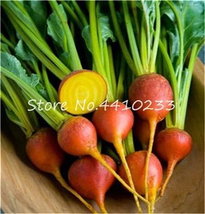 Bloom Green Co. 200pcs cerise Radis Bonsai, la couleur rouge Radis Mix chinois Fruits légumes arc-en-soins biologiques Radis Bonsai Seedsplant: 18