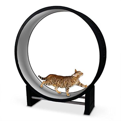 CanadianCat Company Katzenlaufrad 2.0   Cat in Motion hellgrau - Trainingsgerät und Spielzeug für Katzen
