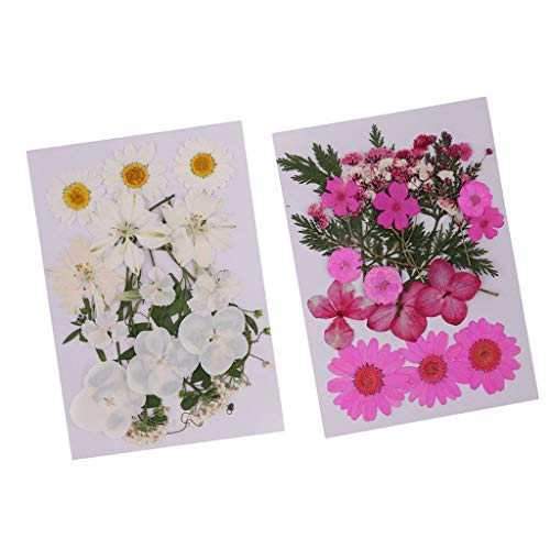 chiwanji 2sets Mixed Pressed Dried Flowers Hojas para Scrapbooking Home Wedding Decor