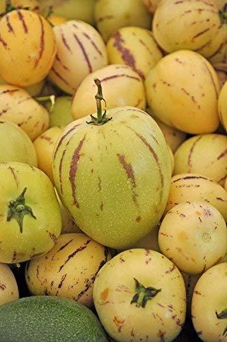 Melon Pear, Pepino seeds - Solanum muricatum - 11 semillas
