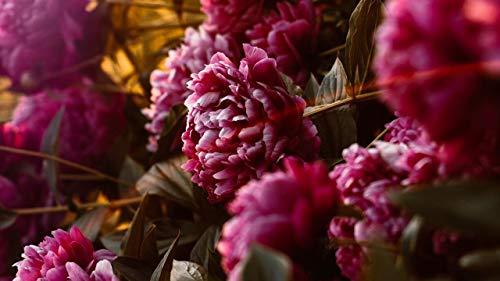 gyuighj Malen Nach Zahlen Kit Erwachsene DIY Digitales Ölgemälde Kinder Handgemaltes Gemälde Für Anfänger Blütenstrauch Blütenblätter Zweig 40X50cm (Ungerahmt)