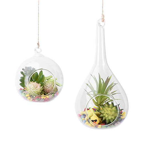 Teardrop glass terrarium for small plants