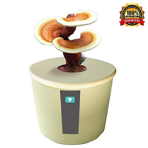 M-TOP Pilze Züchten Set, Bio Shiitake Pilzzuchtkultur Compact, Kräuterseitling Bonsai Zuchtset, Pilze Einfach Selber Züchten für Anfänger