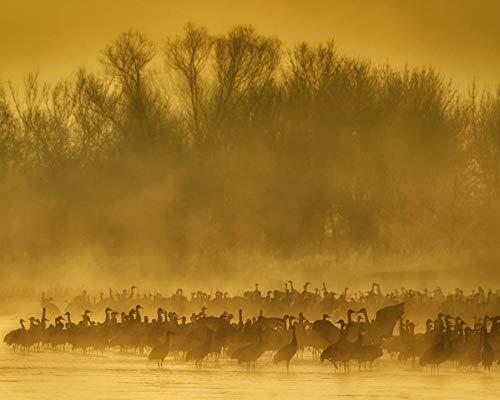 Pussel för vuxna 1 000 stycken, Sandbacke kranar fåglar dimma soluppgång (75 cm x 50 cm)