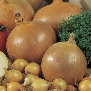 Best sweet onion bulbs Reviews