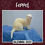 Ferret 2022 Calendar: Ferret mini calendar 2022 2023, Ferret 2022 Planner with Monthly Tabs and Notes Section, Ferret Monthly Square Calendar with 18 Exclusive Photos
