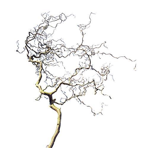 Descena Verschnörkelter Korkenzieher-AST für Vögel (100x40 cm): als Sitzstange - natürliches Vogelzubehör + Vogelspielzeug, Natur-Äste Wellensittiche