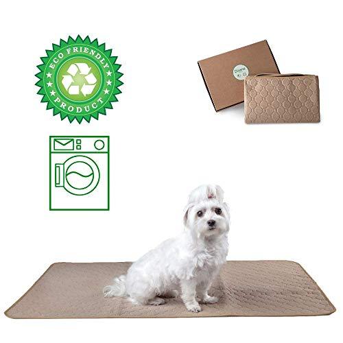 DISANE EMPAPADOR PERRO LAVABLE Y REUTILIZABLE 100 x 67cm BEIGE | Empapadores para perros y gatos lavables a máquina respetuosos con el medio ambiente | Entrenamiento Cachorros, Mascotas Convalecientes
