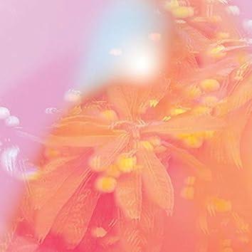 Pollen Plant