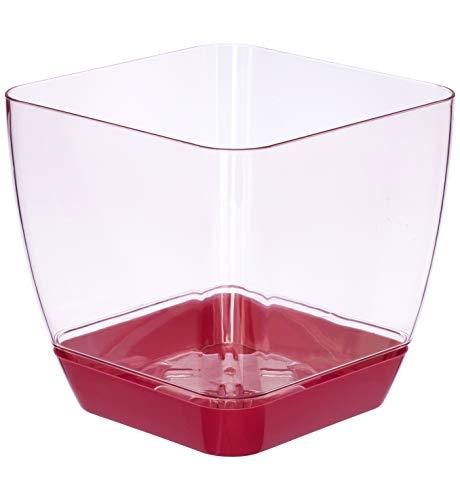 Favilla - Vaso Quadrato per Orchidee, in plastica, Effetto Acrilico, Sottovaso Rosso – Vaso Rosso Trasparente, 5.5 in / 14 cm