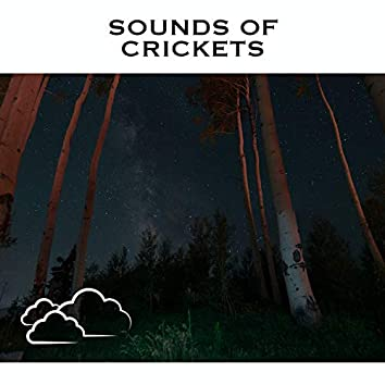 Sounds Of Crickets