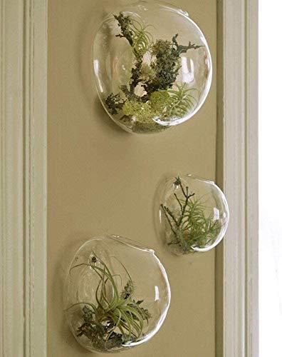 Lot de 3 terrariums muraux à suspendre pour plantes d'intérieur Vase en verre pour fleurs plantes succulentes Décoration murale pour salle de soleil Salon
