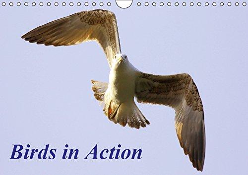 mächtig der welt Vögel in Aktion (horizontaler Wandkalender DIN A4 2019): Ein monatlicher Kalender aktiver Vögel.  …