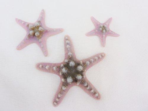 Fish Around Aquarium Sea Stars Pack of 3 Aquarium Decor or Home Bathroom Ornament
