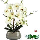 Flores artificiales de orquídea para mesa de comedor con jarrón – orquídea de seda blanca,falsas, arreglos de plantas, decoraciones – Orquídeas florales, arreglo de decoración de interiores, verde