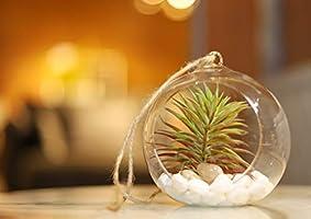Yatai 2 Pcs Hanging Planters Glass Terrarium Globes Ball Vase Succulents Moss Miniature Garden Planters Home Decor...