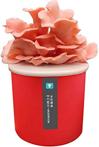 Crecer Setas comestibles en el Interior, Crecen rápidamente su Propio Kit de Bonsai Kit de Semillas único fantástico Kit de jardinería (Color : Red, Size : Red/Pleurotus ostreatus)