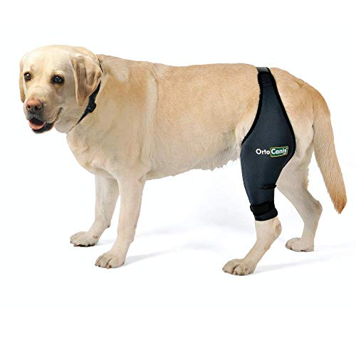 Ortocanis Original Knee Brace for Dogs with ACL, Knee Cap Dislocation, Arthritis - Keeps The Joint Warm - Extra Support - Reduces Pain and Inflammation - Size XXXS - Right Leg