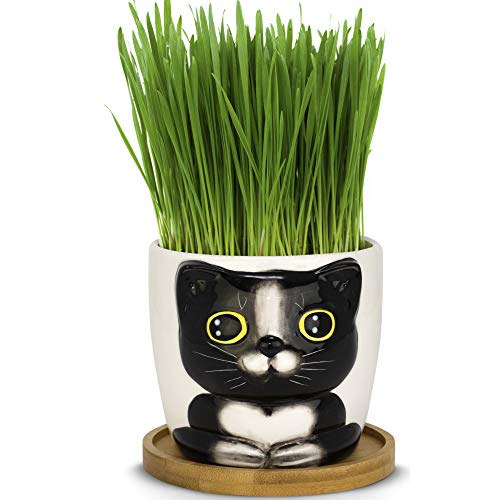 Window Garden - Cat Grass Growing Kit with Kitty Pot Planter - Purrfect for Cat and Pet Lovers