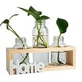 Floreros cilíndricos de vidrio, jarrón de vidrio para escritorio, bombilla con soporte de madera maciza retro para plantas hidropónicas