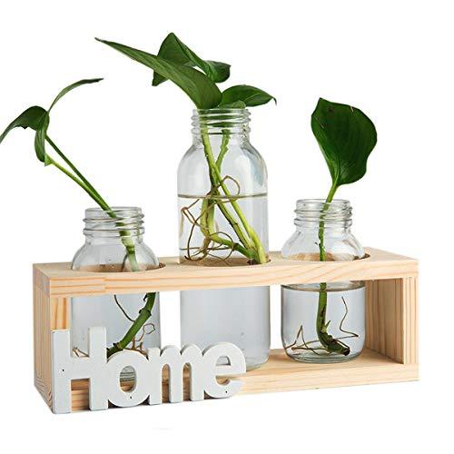 Vasi cilindro di vetro - Vaso di vetro Desktop Bulbiera con retro in legno massello Stand per piante idroponiche arredamento giardino di casa, HOME