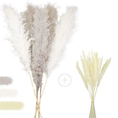 Dekomo Pampasgras Set grau/weiß - 5 groß + 15 klein - natürliche Trockenblumen - Trockenblumenstrauß - getrocknete Blumen - Boho deko - Pampasgras deko - Frühlingsdeko modern - XXL
