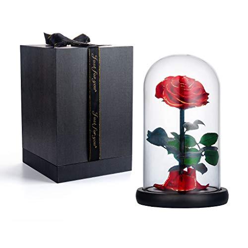 Amycute Ewige Rose,Rose in glaskuppel,Konservierte Blume,Die Schöne und das Biest Rosen im Glas,Romantisch Geschenk zum Geburtstag Jahrestag Haus Weihnachten Dekoration.