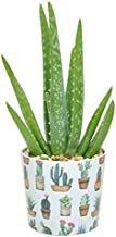 Costa Farms Aloe Vera Live Indoor Plant, Mother's Day Gift Ships in Modern Ceramic Planter, 10-Inch Tall, Green