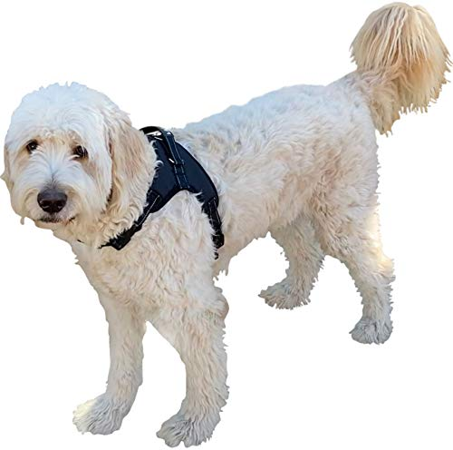 Labra Dog Canine K9 Chest Halter Harness for use Canine Knee Brace (Extra Large)
