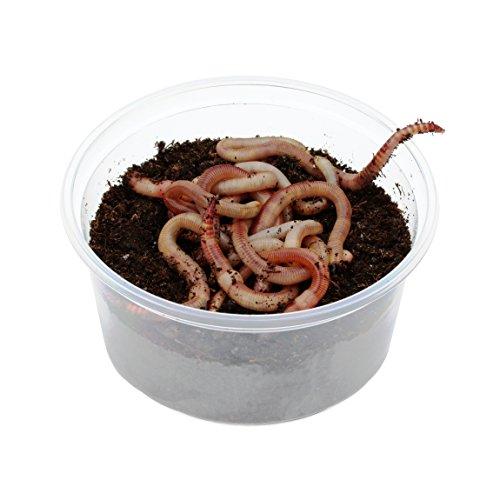 3 Dosen Dendrobena Würmer
