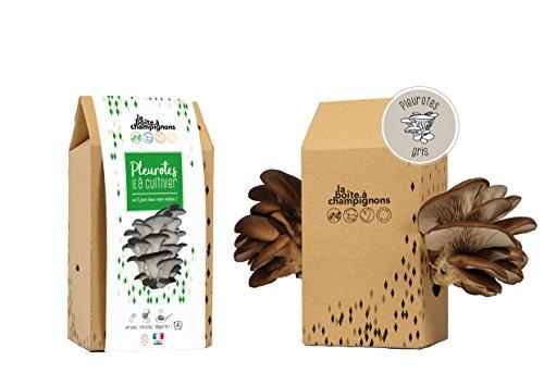 Kit culture de champignons