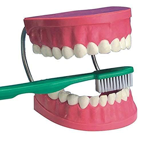 EDU Science 03089 Maqueta gigante de cuidado dental