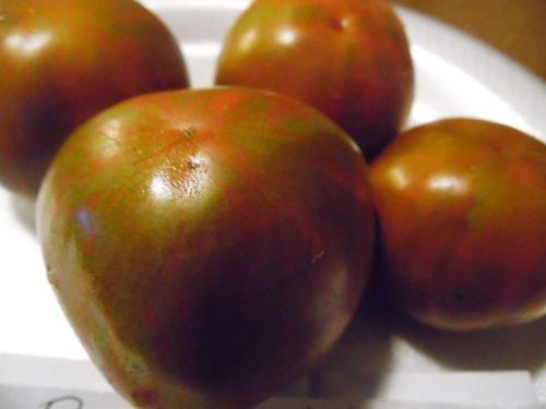 10 Samen von Black Zebra Tomaten-Samen! Große Verkostung Tomaten!