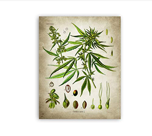 koushuiwa Antique Medicinal Drug Clinical Botanical Poster Pictures For Walls Canvas Pictures Painting Medicine Plant Prints Wall Decor Unframed 50X70Cm Gh1994