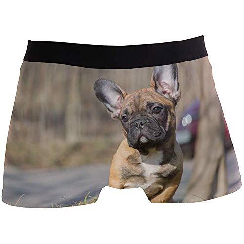 Hombres Boxer Briefs Bulldog francés Cachorro Divertido Animal Ropa Interior Linda para niño Juventud Hombre Poliéster Spandex Transpirable