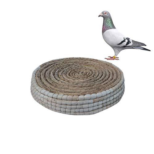 Taube Nest Mais