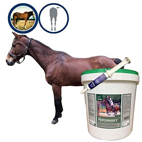 EMMA® Aufbaufutter Muskelaufbau Pferd + Amino Energy Booster I Biotin Zink Selen Pferd I Vitamin A C E K I B komplex ( B1 B2 B6 B 12) Kalzium + Sojabohne Pferde 6 Kg + 30 ml