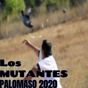 Palomaso 2020