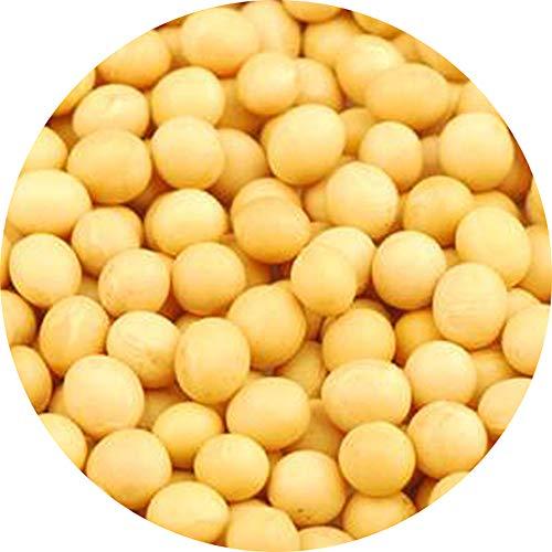 Glorious Inheriting au detail soja jaune des taille generale avec le paquete net de 500 grammes
