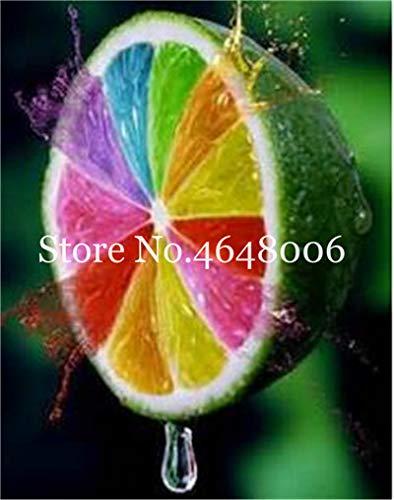 Bloom Green Co. 50 Pcs comestibles de fruits Meyer Citron Bonsai plantes exotiques colorés Citrus Limon fruits frais Arbre Plantes potagères taux élevé de survie: f