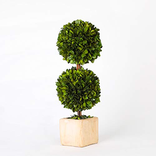 BoxwoodWorld potted preserved boxwood topiary green plant for home decor double ball shape 12 inch tall (Boxwood Leaves)