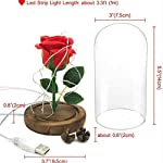 rose flower led light – with red silk rose in glass dome on wooden base – valentine's day & anniversary & birthday gift